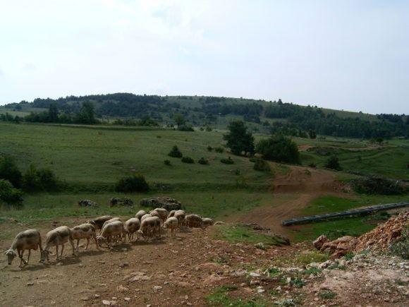 Paysage du Causse – pastoralisme